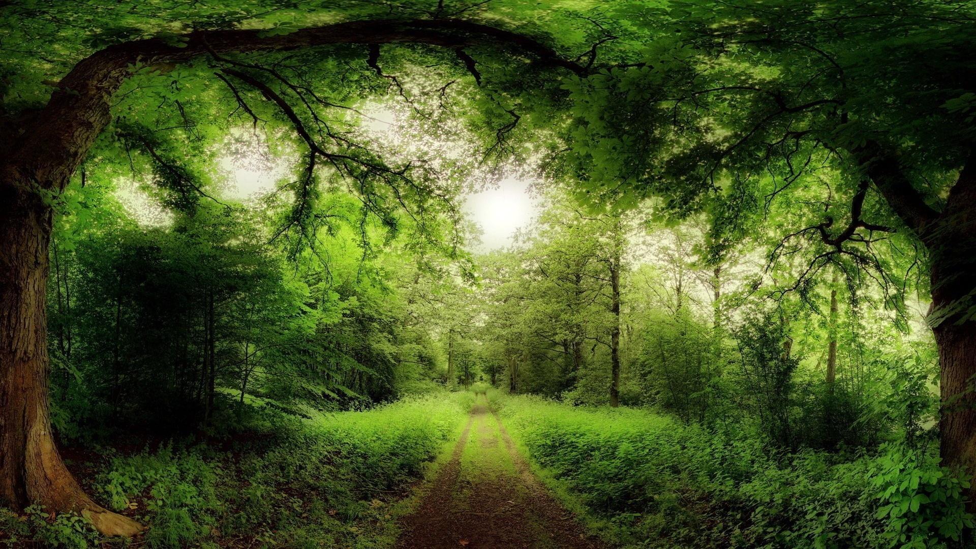 A varázslatos erdő