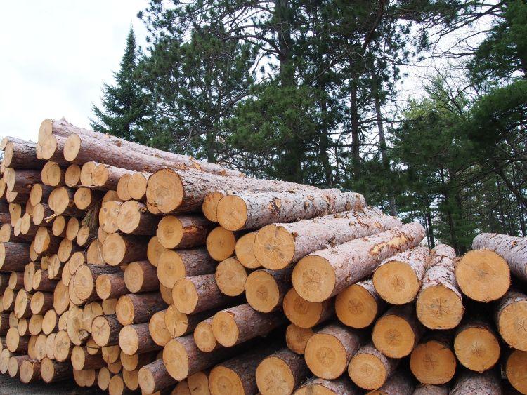 Erdőkezelés